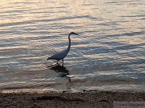 A crane in the bay gif